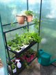 Garden Club at John Colet School