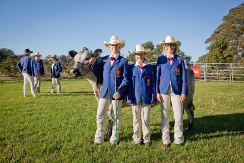Members of the Cattle Show Team