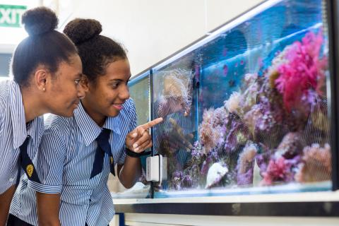 Marine Science at St Patrick's College Townsville