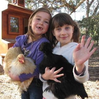 Students of all ages help to take care of our chickens